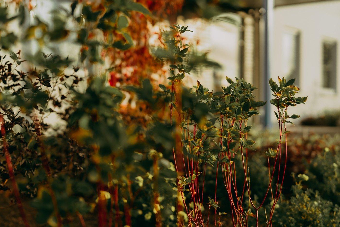 Parkhyllan höstkväll sept Gröna Systrar-32