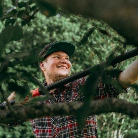 Piotr beskär träd